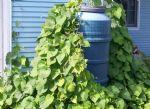 Plant Barrel Netting